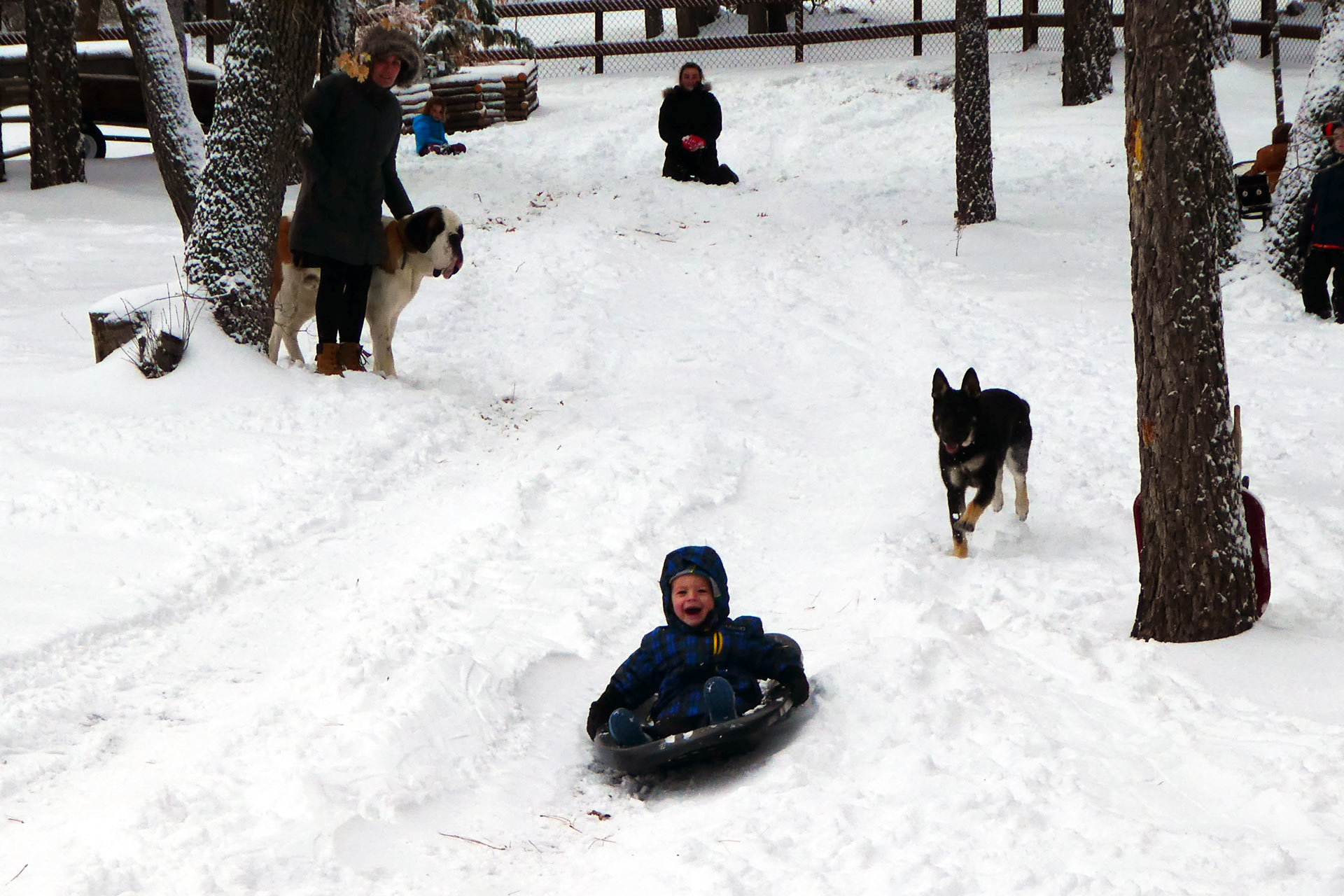 Boy with family sledding near the Knickerbocker Mansion courtyard